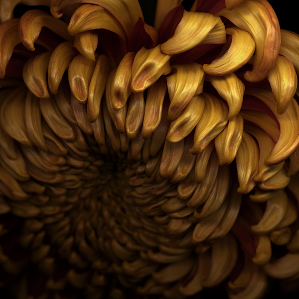 Doris Mitsch - Darkness D - yellow chrysanthemum
